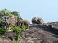 306_ROB9291 olifant op rots 31x31